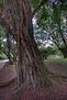 HDR Tree1
