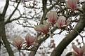 Magnolia Series #8
