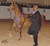 TAMAR CARTIER #630201 (Justafire DGL x Alsace) 2006 chestnut stallion bred by Tamar Arabians/ Tamara K Hanby