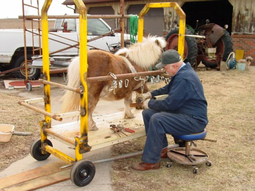 Built A Trimming Stocks Horsetopia Forum