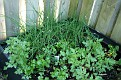GardenMay12 3201