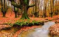 forest-wallpaper-1680x1050-059