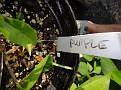 Plants Names DX7 130