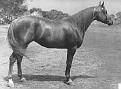 FLAIGA #6687 (Garaff x Flaia) 1951 chestnut mare bred by Dr. and Mrs. Bill Munson