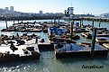 Pier 39, San Francisco.