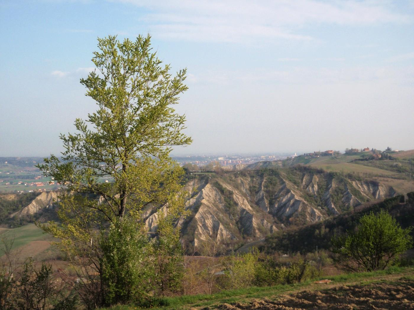 Toranello