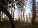 Wald im Dezember