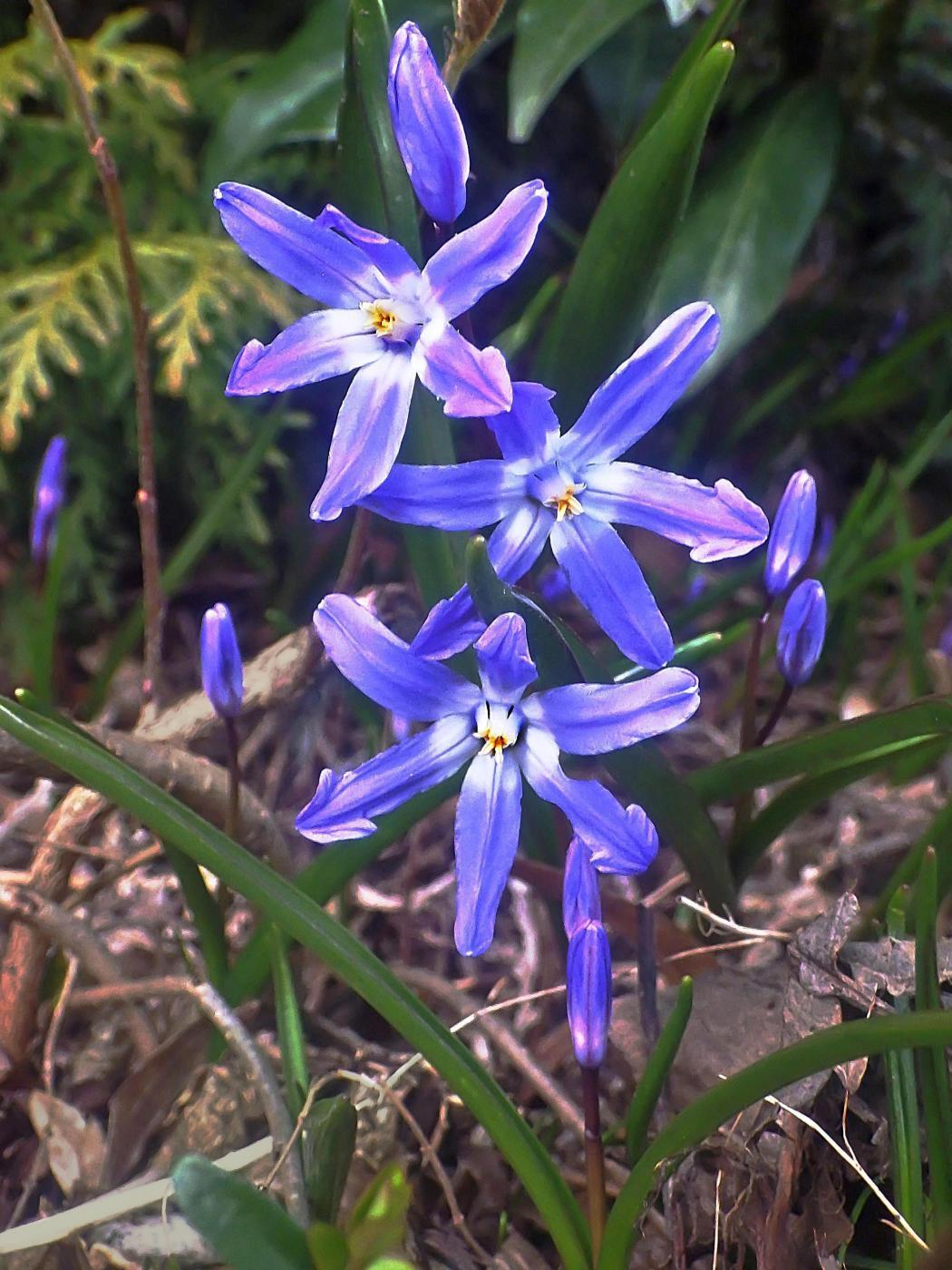 Der Frühling färbt die Natur wieder bunt