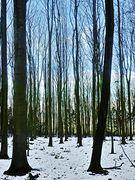 Durch den Buchenwald