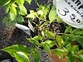 Plants Names DX7 128