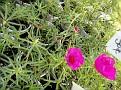 Plants Names DX7 168