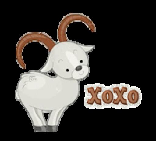 XoXo - BighornSheep