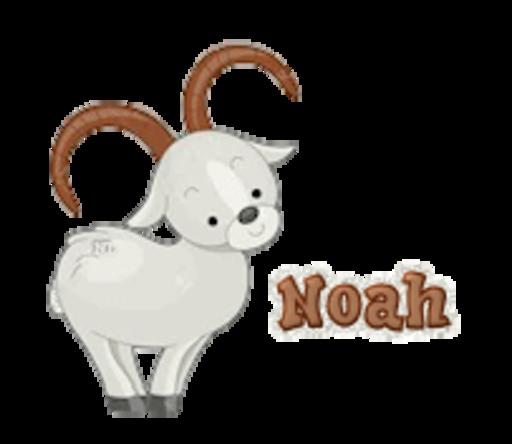 Noah - BighornSheep