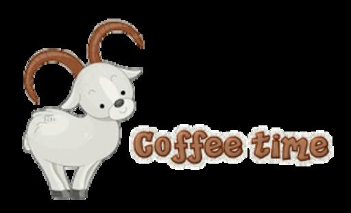 Coffee time - BighornSheep