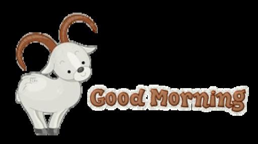 Good Morning - BighornSheep