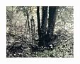 A Country Scene @2009 R valerie jagiello