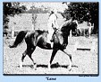*LASSA (Koheilan I x Zulejma, by Koheilan (db)) 1930 chestnut mare; imported to USA 1937 by Gen. J.M. Dickinson. Produced 13 registered purebreds in the USA.