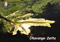2014 OKAVANGO DELTA 2