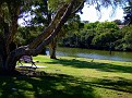 Parramatta River walk 001
