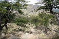 Laguna Torre Trail (36)