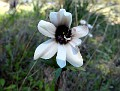 anemone (3)