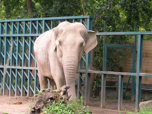 Elephant, again
