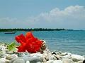 Rouge sur plage
