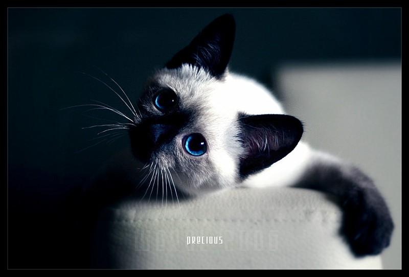 precious_by_werol-vi.jpg