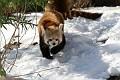 070216 Natl Zoo148