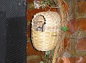 2007 Toledo Zoo 051