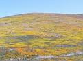 Poppy Reserve2008 052.jpg