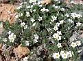 bloeiend plantje