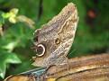 Butterfly World Butterflies Close Up23