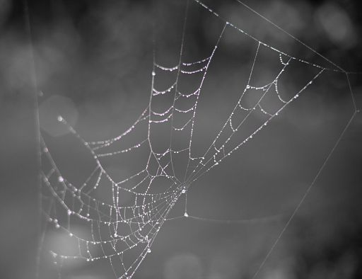 Water droplets glistening in a spider web