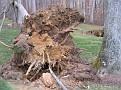 Tree Down (18)