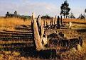 Ethiopia - Tiya Stelaes