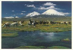 Chile - LLAMA NA