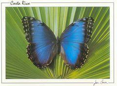 Costa Rica - BLUE MORPHO NA