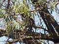 Bird Bredene 20120527 004 3