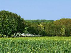 Die Landschaft ist wieder grün