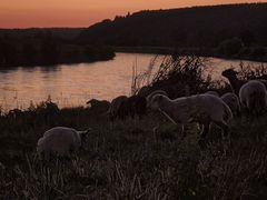 Weser nach Sonnenuntergang