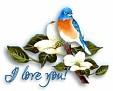 bluebird-loveyou