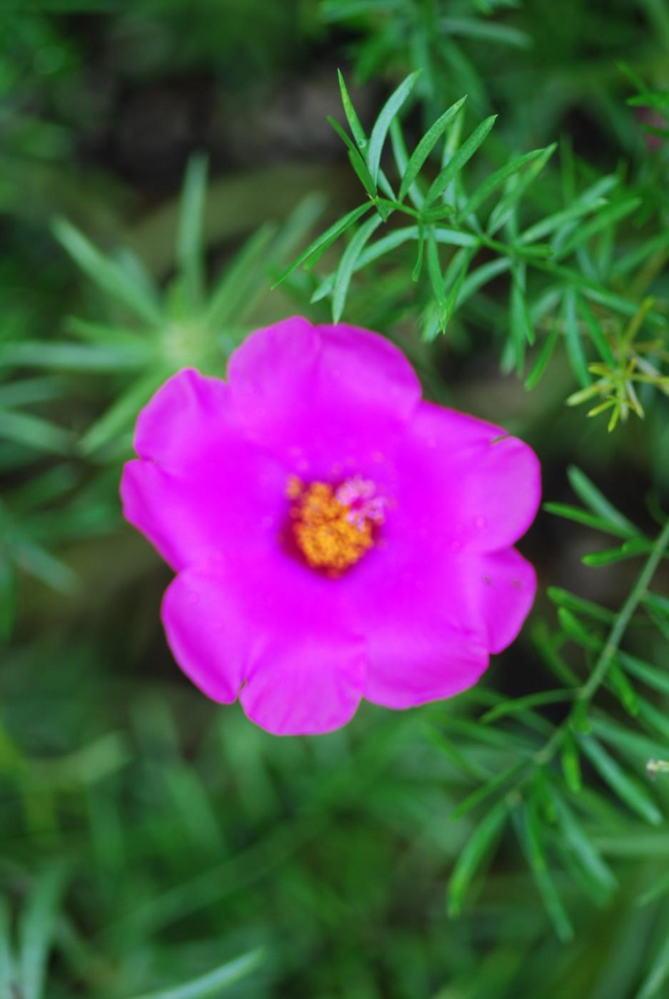 flowers 105mm micro nicor 003