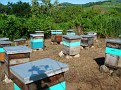 Honey Bee Hives in Mexico   Thank you Octavio Jimenez and your brother Isaac Jimenez in Mexico who tends to the bees  (1)