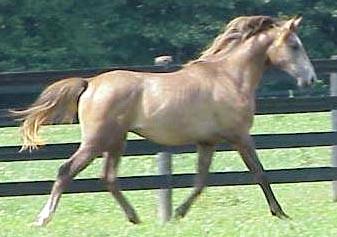 IAMSAMM 2002 chestnut colt