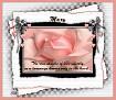 Mary-gailz-pink rose