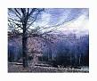 The Blue Trees @2009 R valerie jagiello