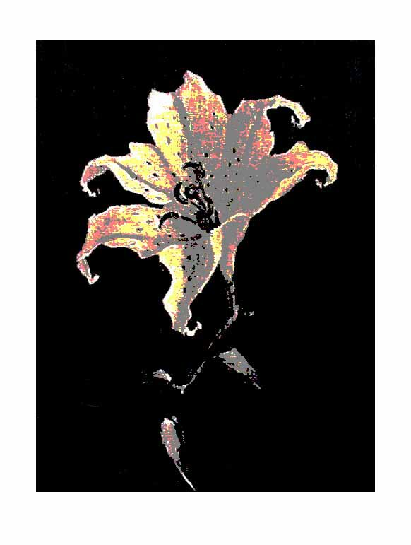 Black Tiger Lily Left @2009 R valerie jagiello