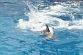 070417 SeaWorld 0085