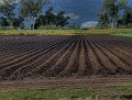Aratula farm ready for planting carrots